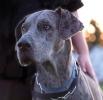 Une vie de chiens_218