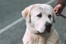 Une vie de chiens_222