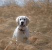 Une vie de chiens_223