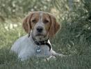 Une vie de chiens_225
