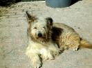 Une vie de chiens_229