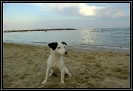 Une vie de chiens_242