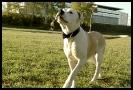 Une vie de chiens_243