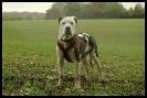 Une vie de chiens_244
