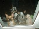 Une vie de chiens_252