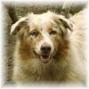 Une vie de chiens_259