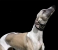 Une vie de chiens_268