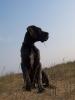 Une vie de chiens_270