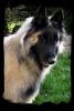 Une vie de chiens_271
