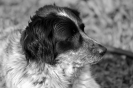 Une vie de chiens_273