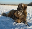 Une vie de chiens_276