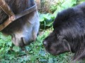 Une vie de chiens_278