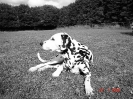 Une vie de chiens_28