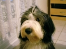 Une vie de chiens_29