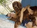 Une vie de chiens_308