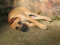 Une vie de chiens_310
