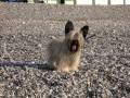 Une vie de chiens_311
