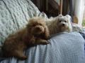 Une vie de chiens_324