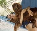 Une vie de chiens_32