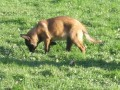 Une vie de chiens_336