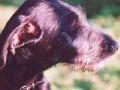 Une vie de chiens_341