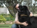 Une vie de chiens_349
