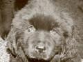 Une vie de chiens_357