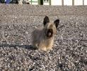 Une vie de chiens_35