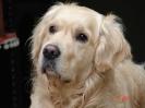 Une vie de chiens_36