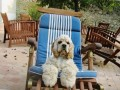 Une vie de chiens_372