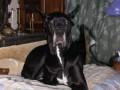 Une vie de chiens_373