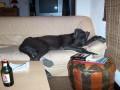 Une vie de chiens_381