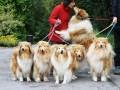 Une vie de chiens_385