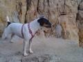 Une vie de chiens_386