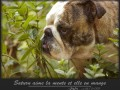 Une vie de chiens_390