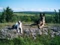 Une vie de chiens_393