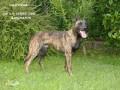 Une vie de chiens_398