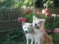 Une vie de chiens_400
