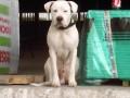 Une vie de chiens_419
