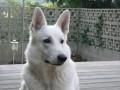 Une vie de chiens_438