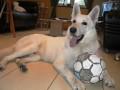 Une vie de chiens_439