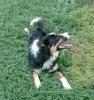Une vie de chiens_43