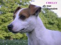 Une vie de chiens_449