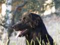 Une vie de chiens_450