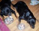 Une vie de chiens_45
