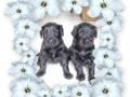 Une vie de chiens_464