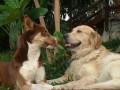 Une vie de chiens_472