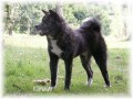 Une vie de chiens_476