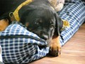 Une vie de chiens_488