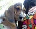 Une vie de chiens_49